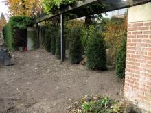 Die Hecke zum Nachbarn ist weg Am linken Bildrand: Überstehende Hecke muss auch noch weichen [03.11.2009] Garten- und Außenanlagen
